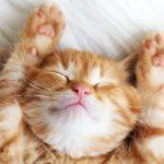 快適な寝室を目指す 温度と睡眠の関係